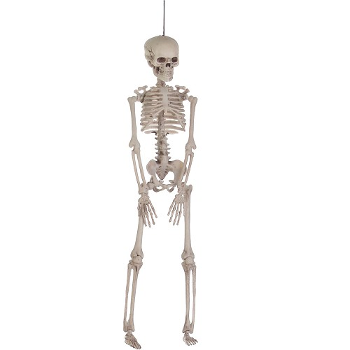 Petit squelette