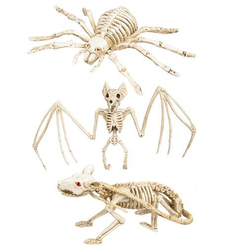 Esqueleto Rata