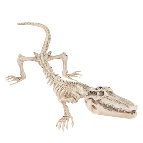Esqueleto Cocodrilo